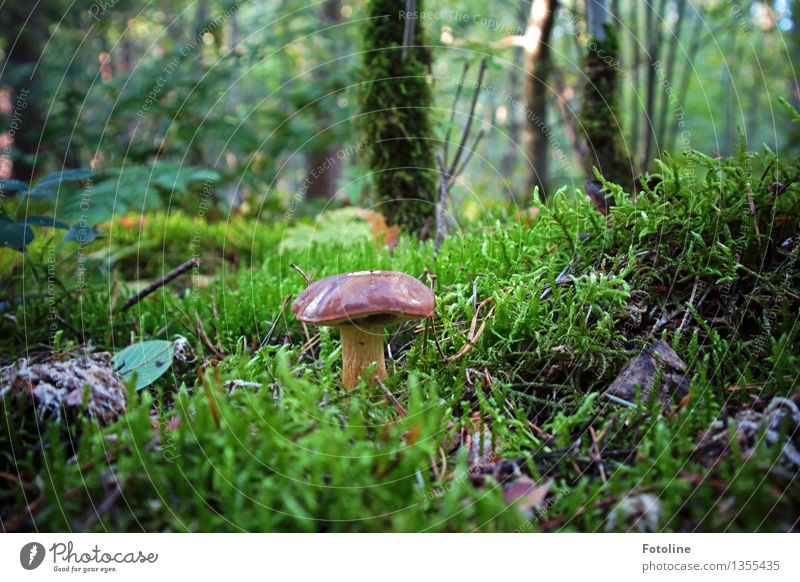 Hmmmjamjamjam! Environment Nature Plant Autumn Beautiful weather Tree Grass Moss Forest Natural Brown Green Mushroom Cep Colour photo Multicoloured