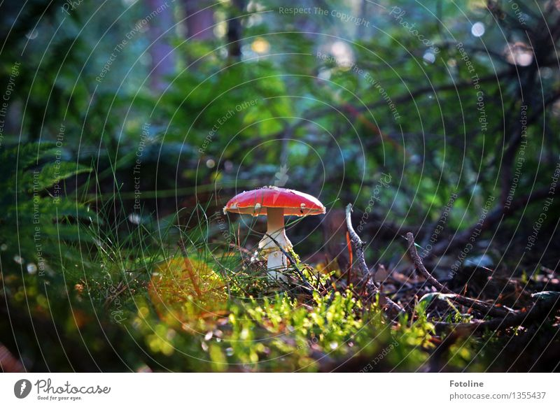 beauty! Environment Nature Plant Autumn Beautiful weather Tree Grass Bushes Moss Fern Park Meadow Forest Natural Mushroom Amanita mushroom Red Colour photo