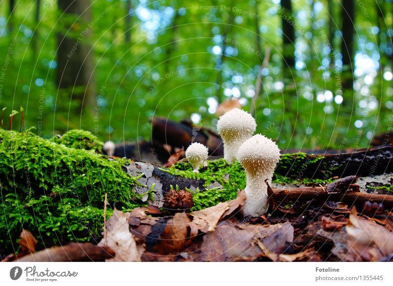 aliens Environment Nature Landscape Plant Autumn Beautiful weather Tree Moss Forest Bright Natural Warmth Green Mushroom Autumn leaves Leaf Colour photo