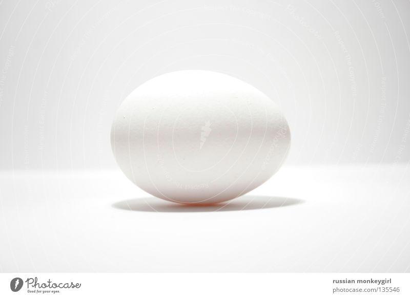 White Life Bird Round Gastronomy Egg Barn fowl UFO Oval Animal