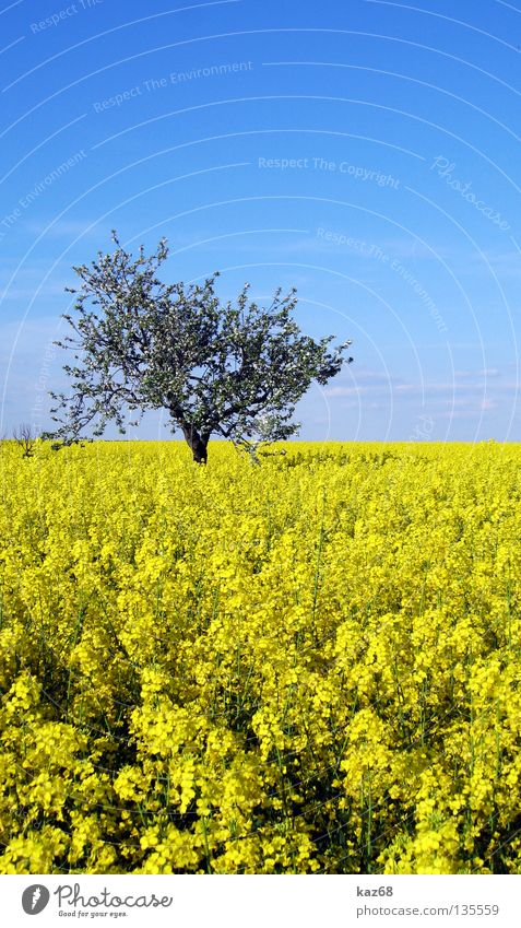 blue yellow Clouds Air Leisure and hobbies Vacation & Travel Horizon Far-off places Field Canola Oilseed rape oil Plant Farm Agriculture Yellow Natural growth