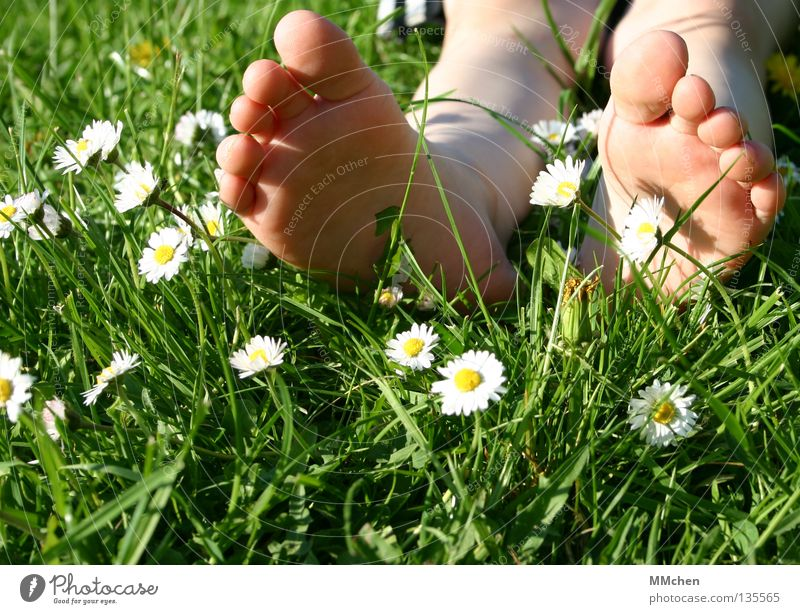 fallen down Grass Meadow Field Multicoloured Summer Flower Daisy Stalk Blade of grass Relaxation Rest Sleep Sunbathing Toes Sole of the foot Barefoot Wellness