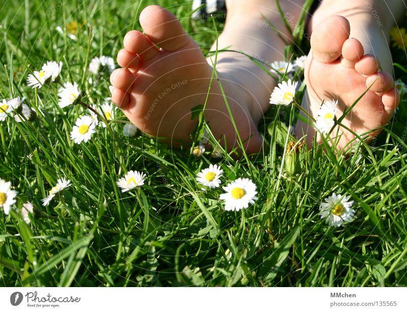 Nature Flower Plant Summer Relaxation Meadow Grass Spring Feet Field Sleep Wellness Lawn Lie Stalk Fatigue
