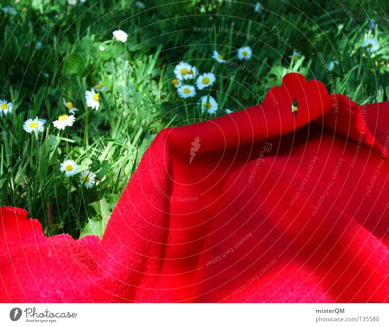 Nature White Green Beautiful Red Summer Flower Colour Calm Relaxation Nutrition Meadow Emotions Freedom Warmth Grass