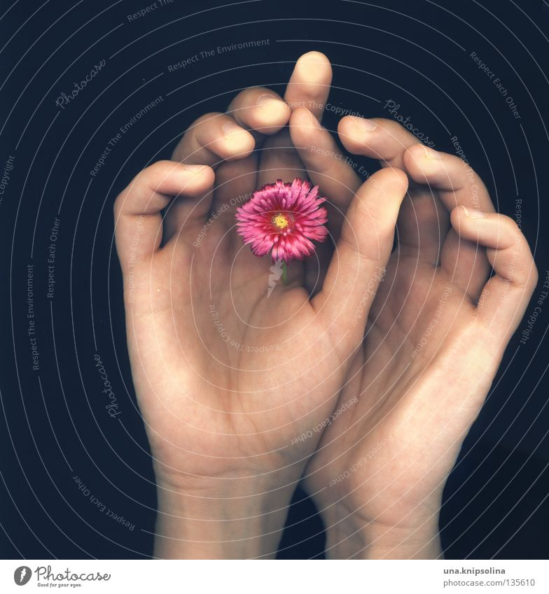 Hand Flower Emotions Blossom Fingers Touch Vessel Rachis Intuition Photographic technology Scan Fingerprint Scanner