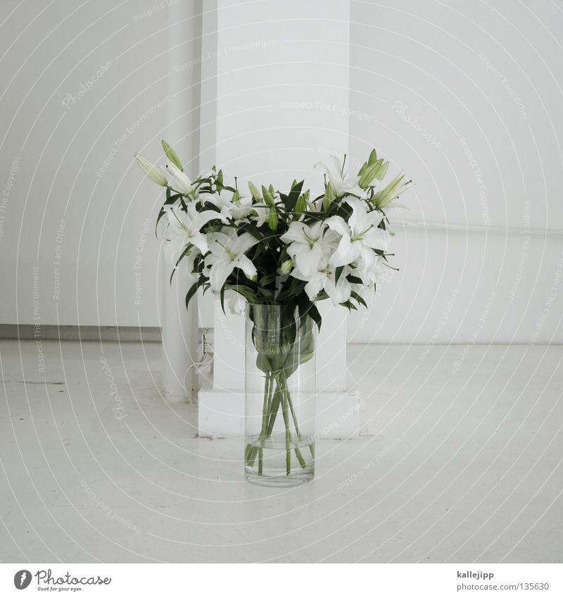 White Plant Flower Colour Blossom Gold Birthday Multiple Success Growth Decoration Romance Climbing Living thing Stalk Turquoise