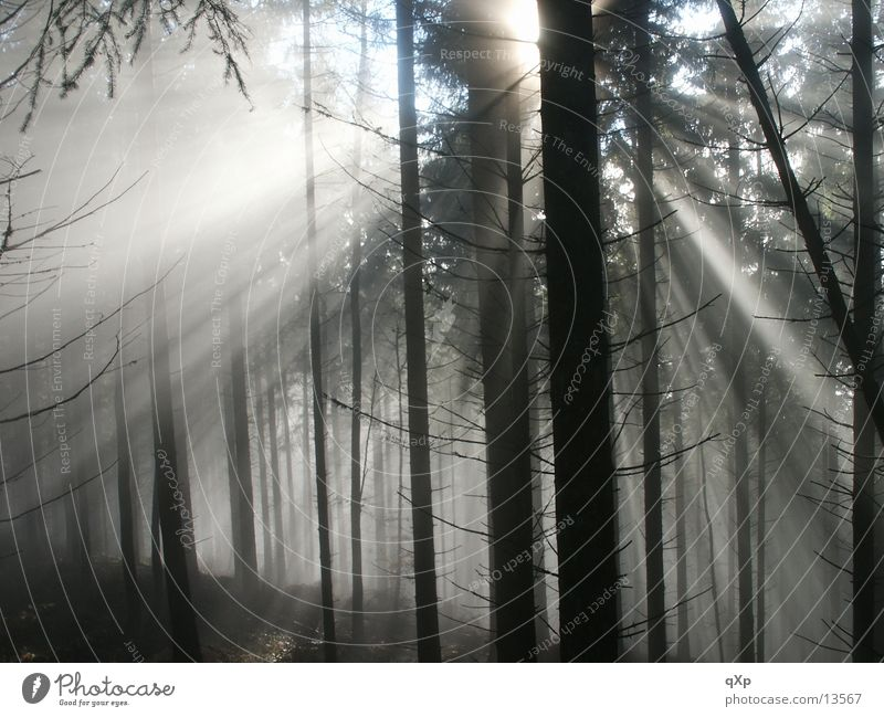 forest in the fog Forest Tree Fog Schauinsland Autumn Winter Mountain Sun