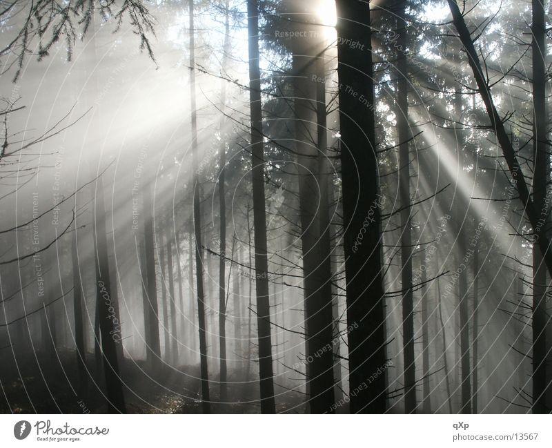 Tree Sun Winter Forest Autumn Mountain Fog Black Forest Schauinsland