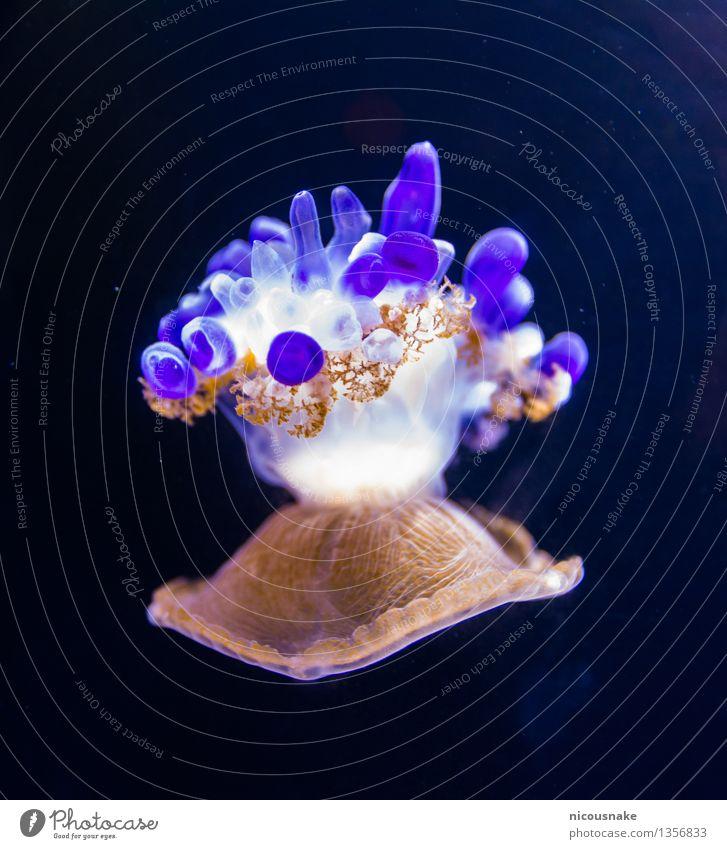 Jellyfish Aquarium 1 Animal Movement Swimming & Bathing Cute Beautiful Brown Violet White Bizarre Exotic Colour Environmental protection Colour photo Close-up