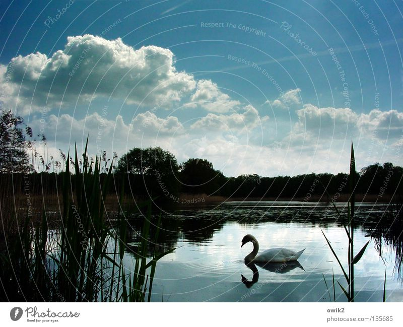 Sky Nature Plant Water White Tree Clouds Calm Animal Spring Lake Germany Bird Horizon Weather Feather