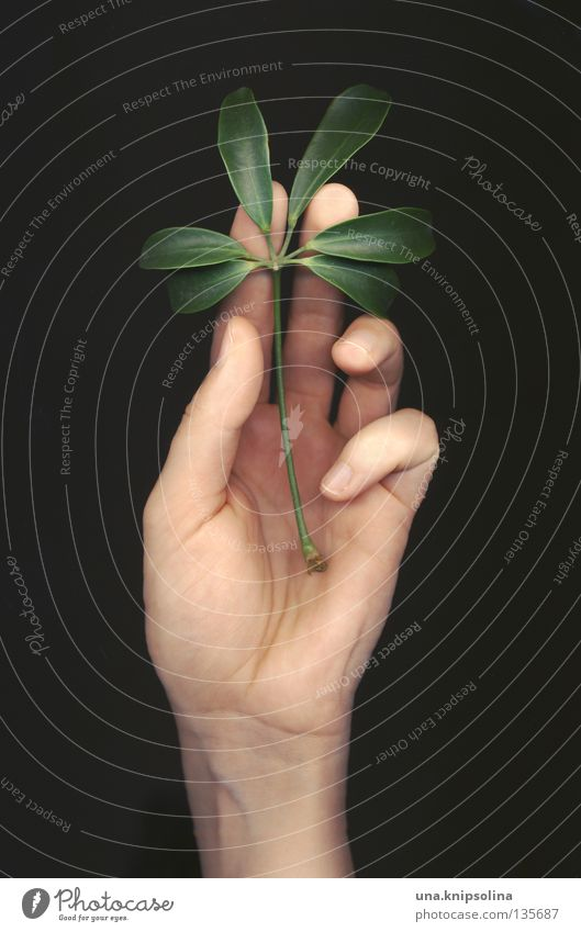Nature Green Hand Plant Emotions Line Fingers Touch Tracks Delicate Caresses Intuition Photographic technology Scan Fingerprint Scanner