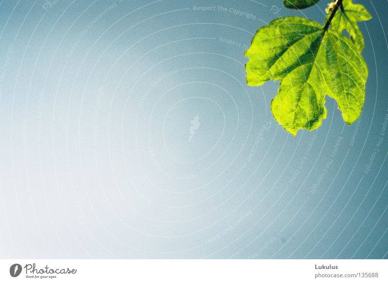 Grow to the sun Leaf Plant Green Park Sky Blue Sun Bright Leaf green