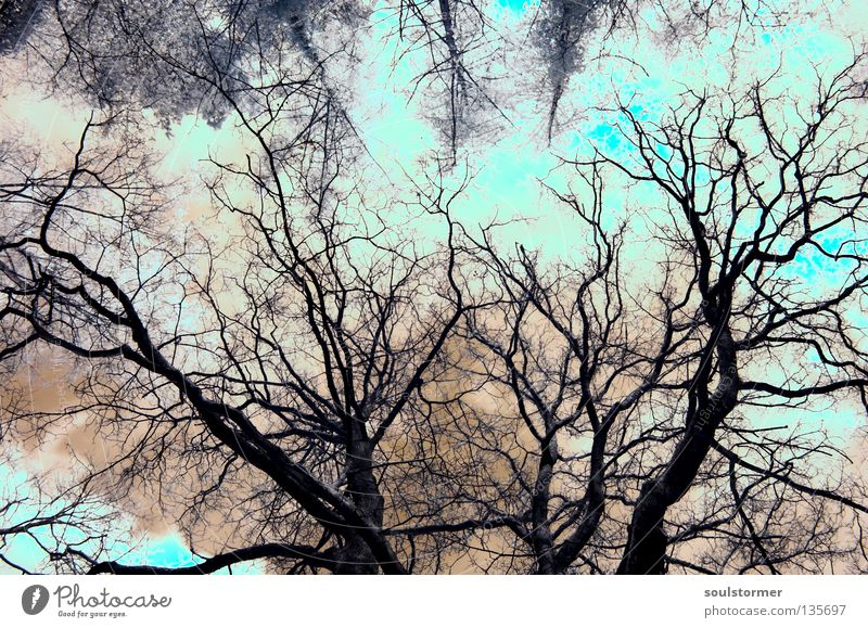 Sky Old Tree Red Clouds Far-off places Freedom Exceptional Growth Point Branch Infinity Turquoise Surrealism Overexposure Size