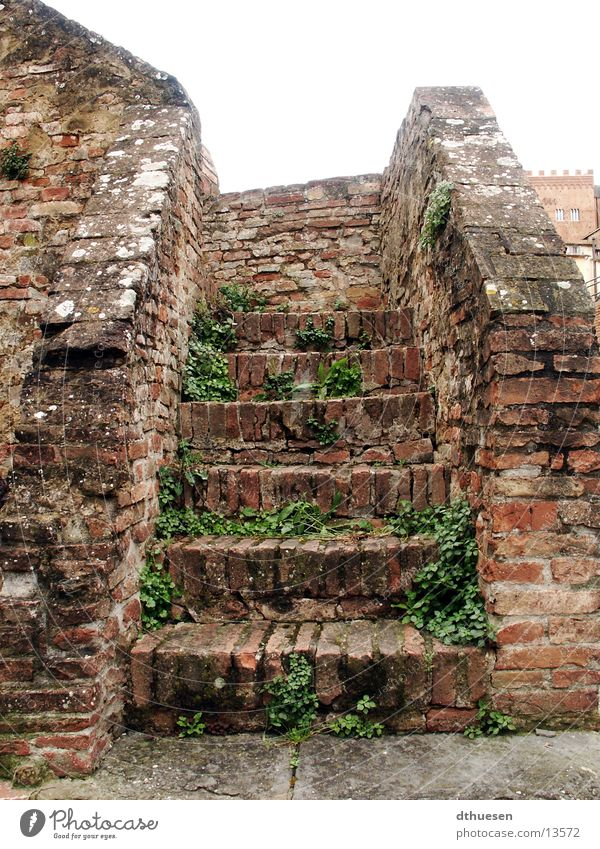 Stone staircase in Sienna (Italy) Brick Red Overgrown Derelict Masonry Architecture Stairs Old eddy growth Siena Loneliness