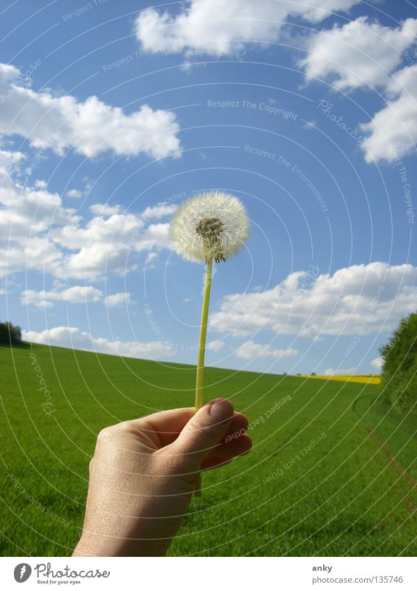 Nature Hand Summer Clouds Meadow Spring To hold on Dandelion Bavaria Blue sky