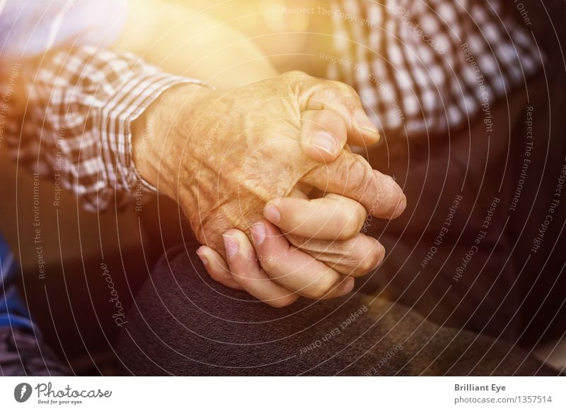 Human being Nature Old Summer Sun Hand Life Love Spring Emotions Senior citizen Boy (child) Family & Relations Together Fingers Touch