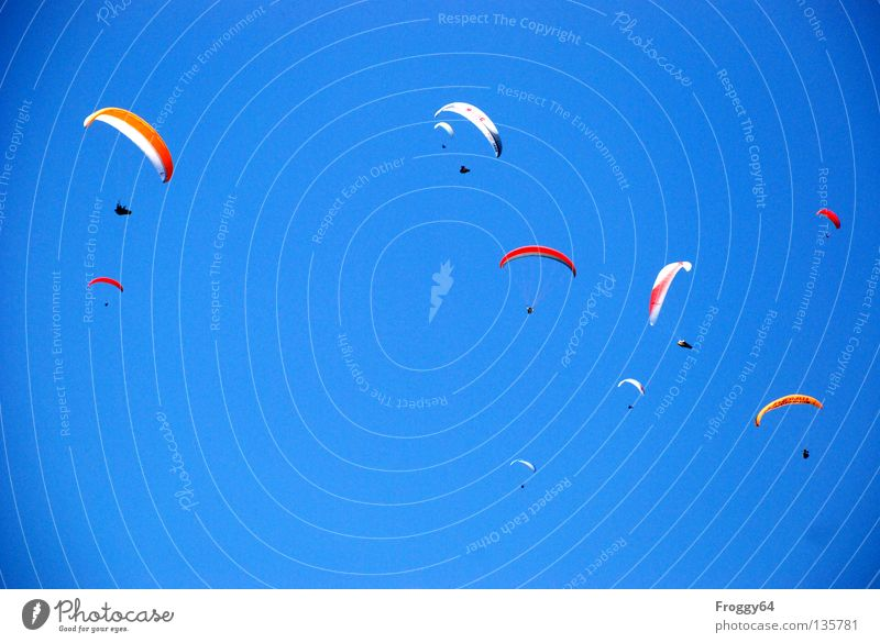 poultry Paraglider Air Clouds Pilot Black Schauinsland Bird Sporting event Multicoloured Sports Playing Extreme sports Aviation Sky Blue Orange Wind Weather