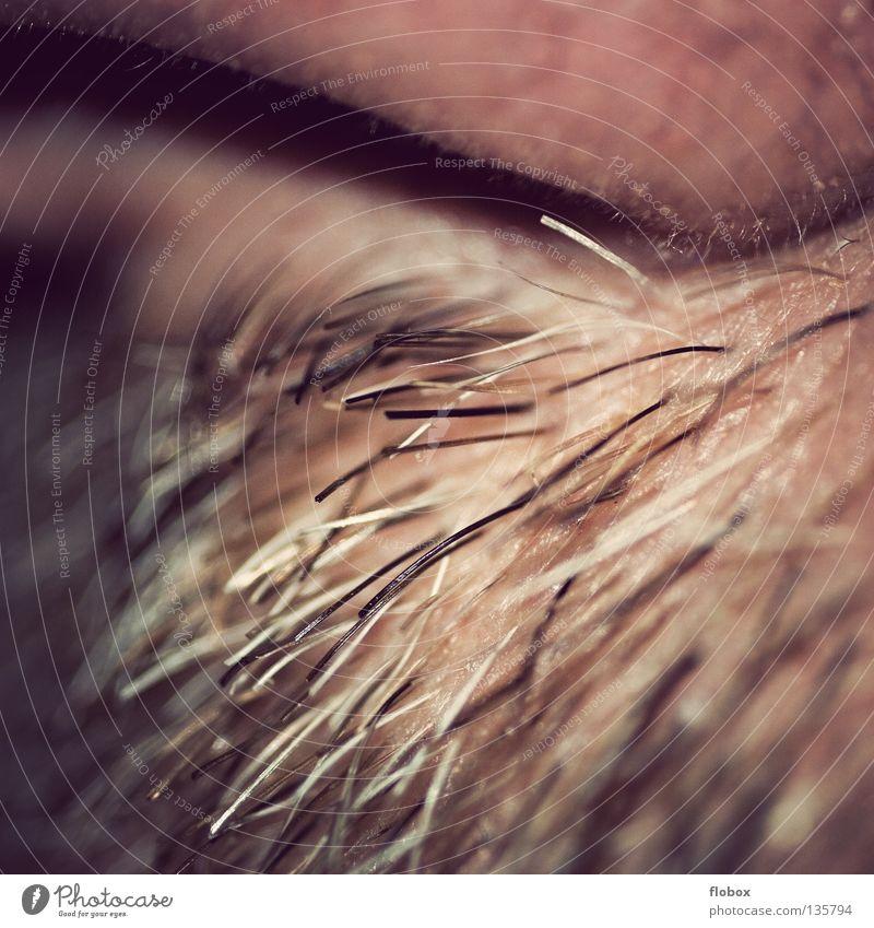 Body Parts V Nasal hair Odor Nostril Tip of the nose Concha Mucous membrane Air Breath Breathe Facial hair Moustache Beard hair Rough Organ Blur Soft Hard