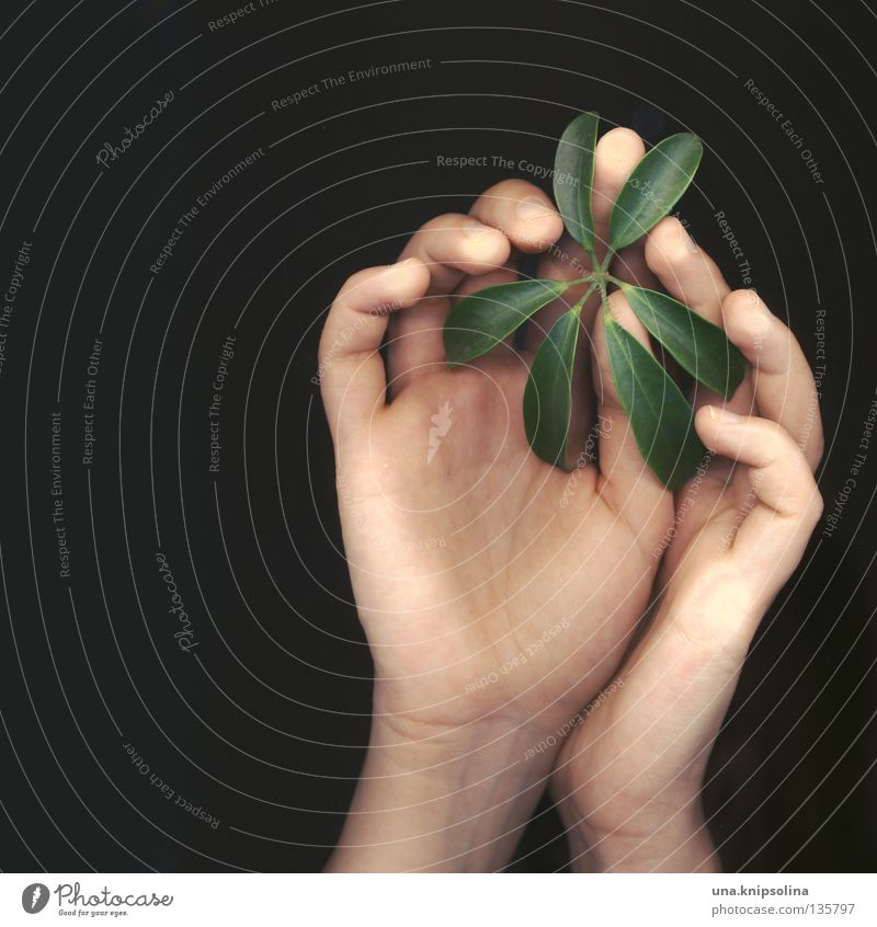 .leaf Hand Fingers Nature Plant Line Touch Green Emotions Delicate Caresses Intuition Fingerprint Tracks Scanner Photographic technology fingertips other