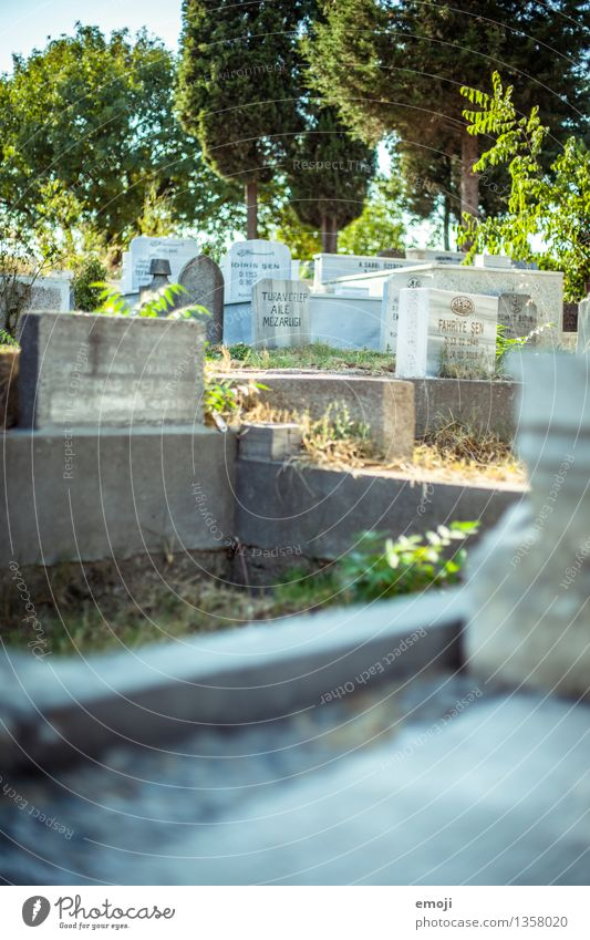 Istanbul Environment Tourist Attraction Cemetery Grave Tomb Tombstone Green Colour photo Exterior shot Deserted Day Shallow depth of field