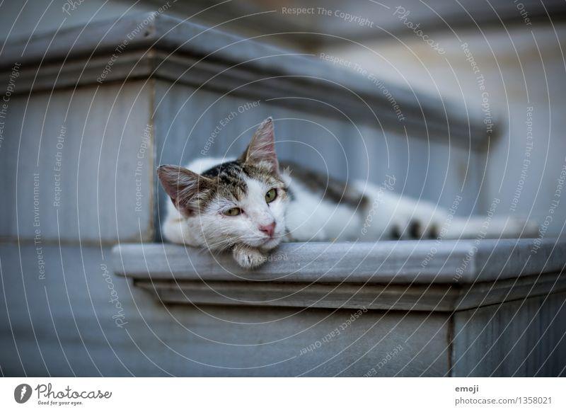 Cat Animal Dark Lie Cute Break Pelt Pet Animal face Comfortable Goof off