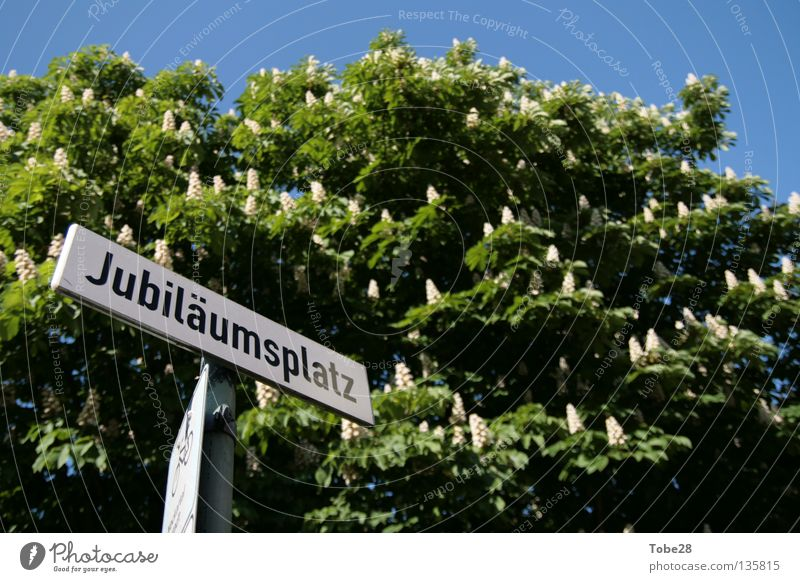 Spring Signs and labeling Places Baden-Wuerttemberg Jubilee Street sign Heidelberg