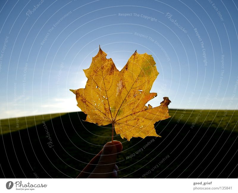 it harbstet very much Leaf Autumn Maple tree Maple leaf Sun Summer Vessel Hand Fingers Thumb Grass Meadow Hill Sky Clouds Warmth Structures and shapes