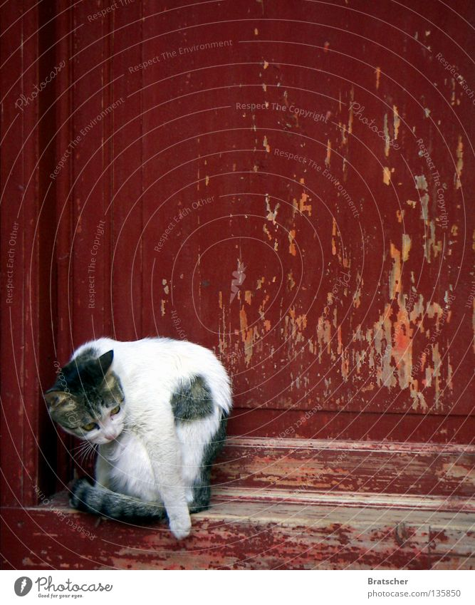 Cat Red Autumn Door China Boredom Mammal Asia Jubilee Tibet