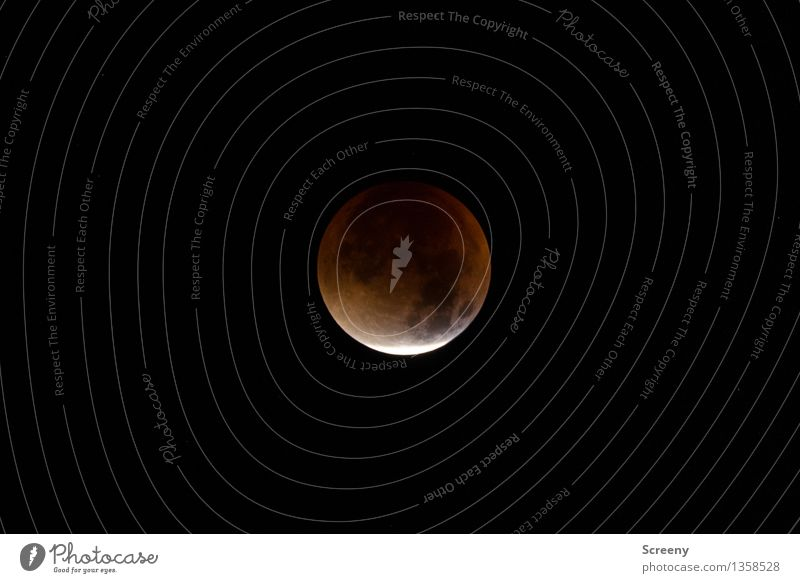 Sky Nature Uniqueness Round Universe Moon Night sky Full  moon Corona Lunar eclipse