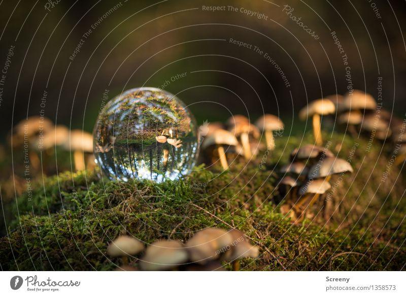Nature Plant Landscape Calm Forest Autumn Illuminate Idyll Glass Beautiful weather Serene Mushroom Moss Glass ball Crystal ball