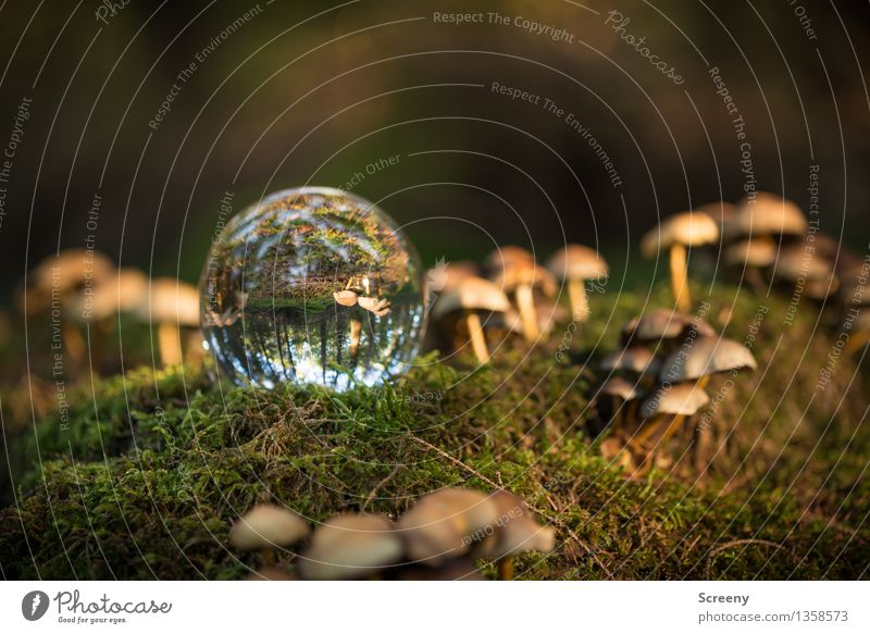 Worlds #13 Nature Landscape Plant Autumn Beautiful weather Moss Forest Glass ball Crystal ball Illuminate Serene Calm Idyll Mushroom Colour photo Exterior shot