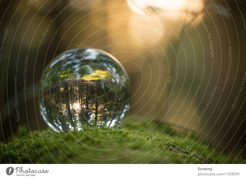 Worlds #12 Nature Landscape Plant Sun Sunlight Summer Autumn Beautiful weather Moss Forest Glass ball Crystal ball Illuminate Round Serene Calm Idyll