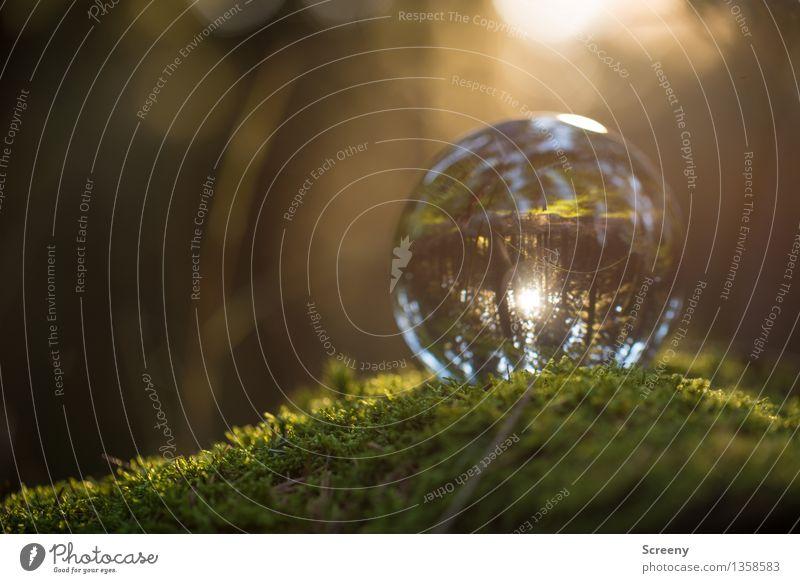 Worlds #15 Nature Landscape Plant Sun Sunlight Summer Autumn Beautiful weather Moss Forest Glass ball Crystal ball Illuminate Small Round Serene Calm Idyll