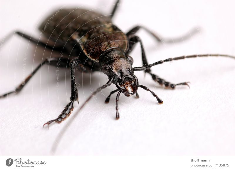 Legs Fear Back Floor covering Near Insect Creepy Disgust Panic Beetle Feeler Crawl Pine Shell Armor-plated Enlarged