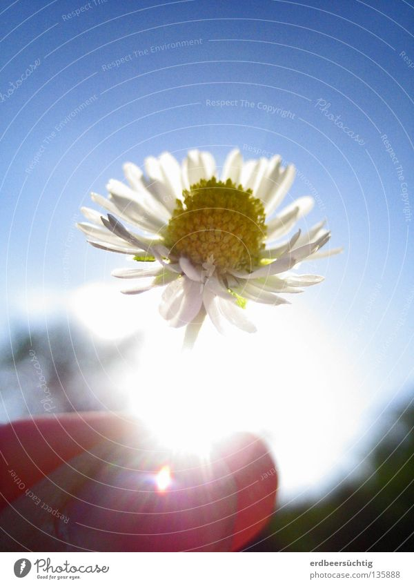 Beautiful Sky White Flower Green Blue Yellow Blossom Spring Air Bright Glittering Small Fingers Transience