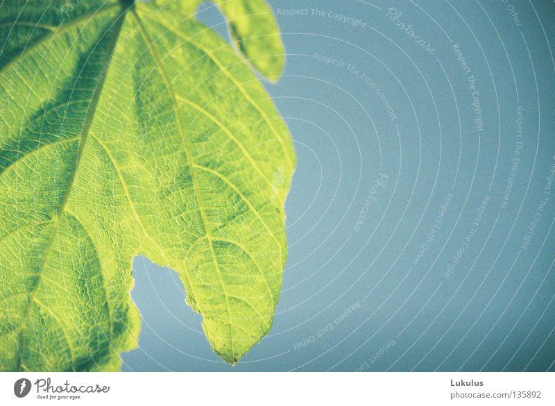Grow to the sun 2 Green Leaf Thread Sky Blue