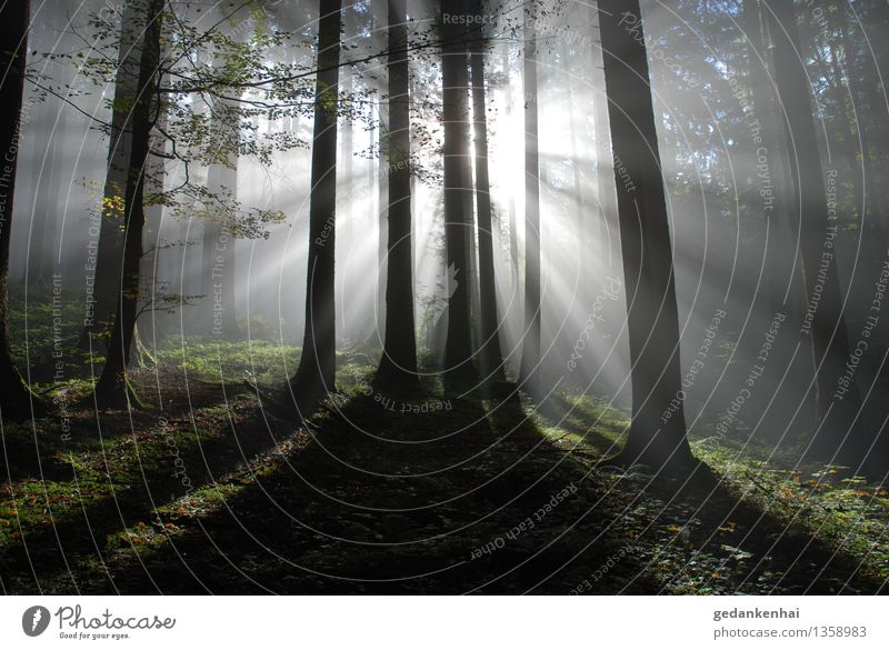 Light and shadow Environment Nature Plant Sun Fog Forest Emotions Calm Hope Belief Timidity Esthetic Power Back-light Woodground Air Purity Clean