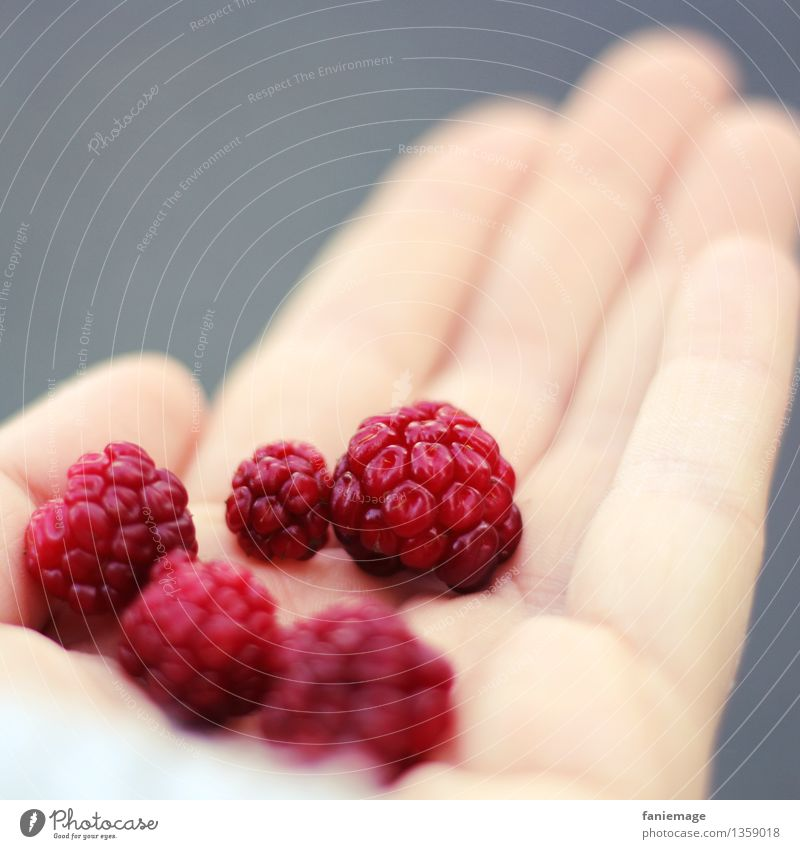 Nature Hand Red Healthy Eating Forest Autumn Gray Fruit Sweet Footpath Delicious Organic produce Harvest Berries