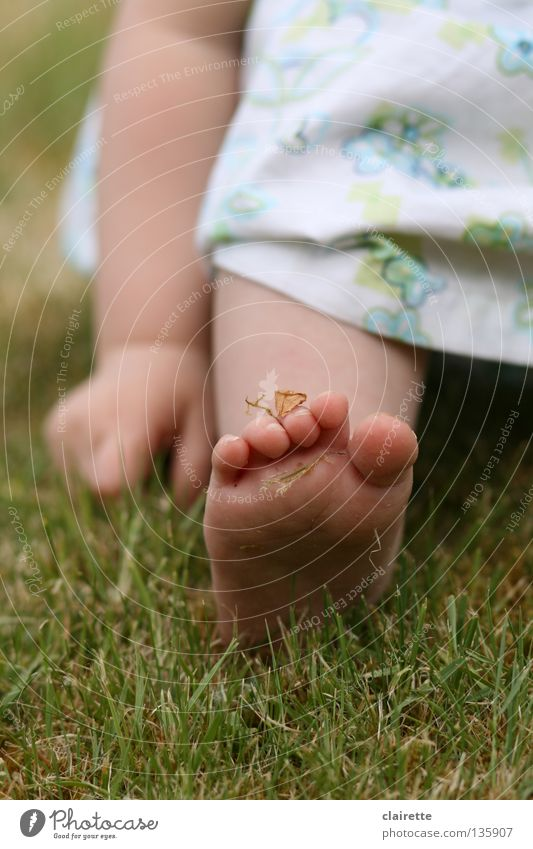 moss to foot Colour photo Multicoloured Exterior shot Summer Child Human being Baby Toddler Arm Hand Legs Feet 1 0 - 12 months 1 - 3 years Spring Grass Meadow