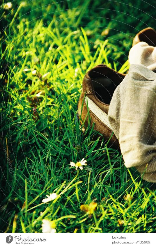 Green Yellow Grass Footwear Brown Peace Stripe Stockings Daisy