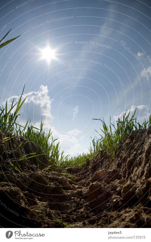 A deep insight! Summer Dry Grass Back-light Brown Sun Sky Earth Dig Soft coal mining Bright Ökö Blue