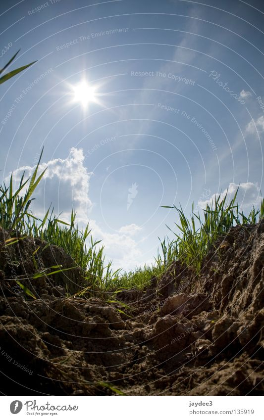 Sky Sun Blue Summer Grass Bright Brown Earth Dry Mining Dig Soft coal mining