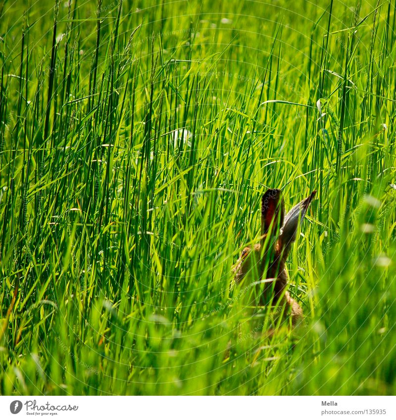 Nature Green Animal Meadow Grass Spring Freedom Wait Environment Sit Easter Natural Wild animal Cute Hide