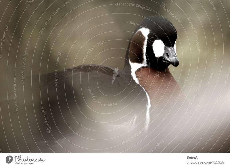Nature White Red Black Animal Dark Bright Brown Bird Bushes Wild animal Zoo Hide Frame Neck Beak
