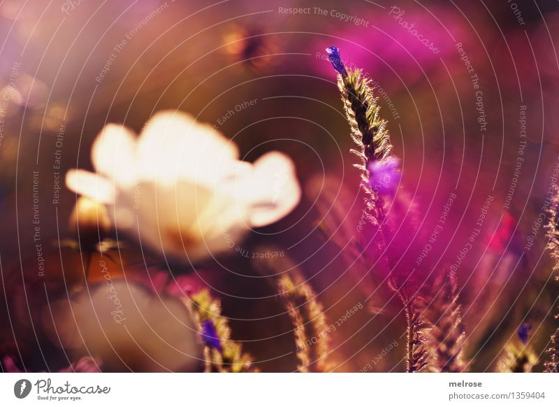 Nature City Plant Green Beautiful White Sun Flower Blossom Autumn Grass Style Garden Brown Moody Pink