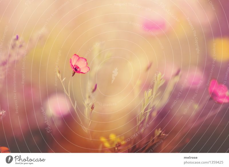 Nature Plant Beautiful Relaxation Flower Leaf Yellow Blossom Autumn Meadow Grass Style Gray Pink Dream Design