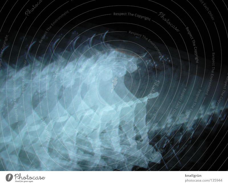 White Black Animal Dark Bright Power Force Mammal Antlers 7 Bull Physics Constellation