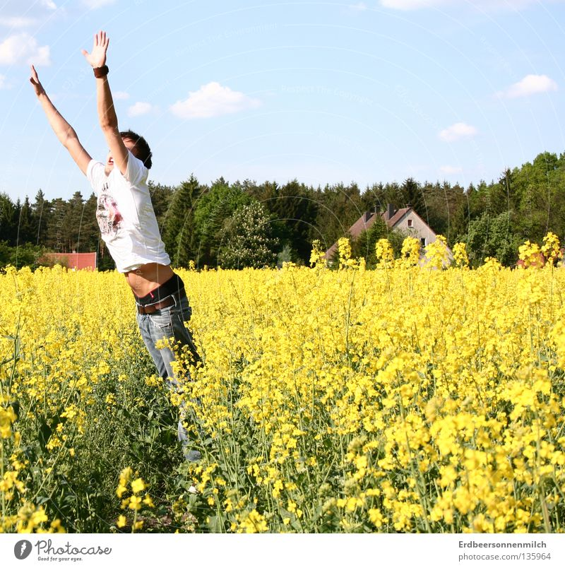 Sky Blue Green Summer Flower Joy Clouds House (Residential Structure) Freedom Jump Spring Field Beautiful weather Cooking oil Oilseed rape oil