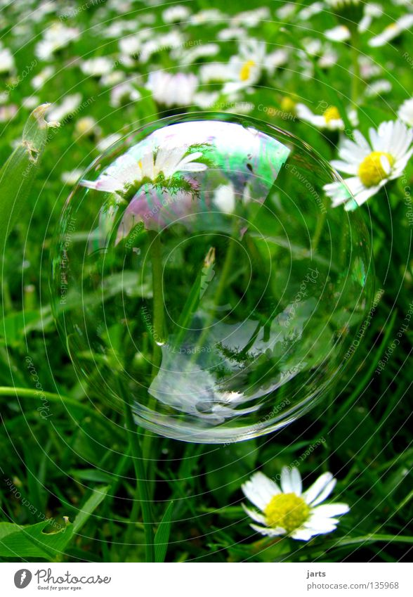 small world Meadow Grass Daisy Green Transience Macro (Extreme close-up) Close-up sieve bubble Bubble jarts