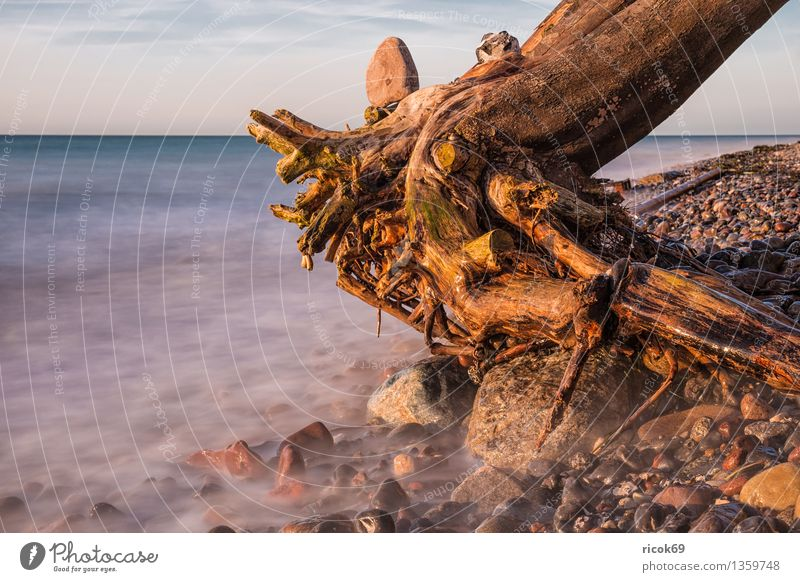 trunk Vacation & Travel Beach Nature Landscape Water Clouds Rock Coast Baltic Sea Ocean Stone Blue Idyll Calm Tourism Tree trunk Wustrow Fischland Darss